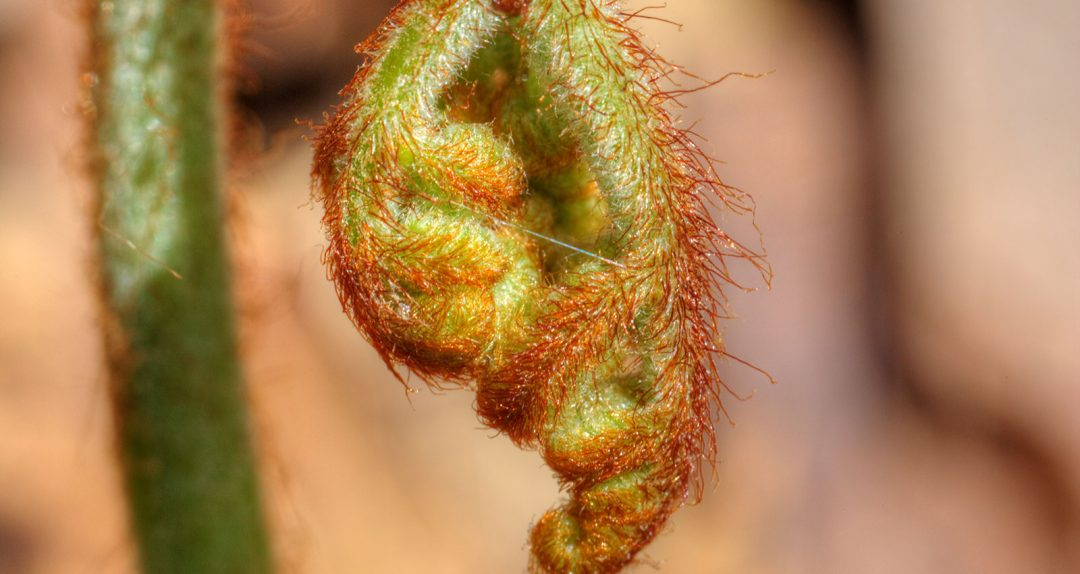Fuzzy Unfurling in Spring